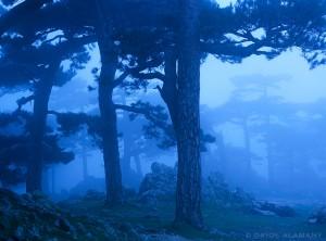 Kelionė mišku